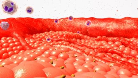 Body Cells Stock Photo