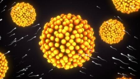 In Vitro Fertilization (IVF)