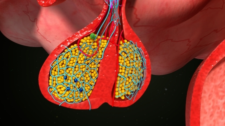 pituitary gland: Pituitary gland anatomy Stock Photo