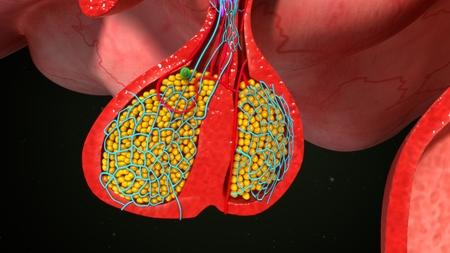 Hypofyse Endocriene cellen Stockfoto