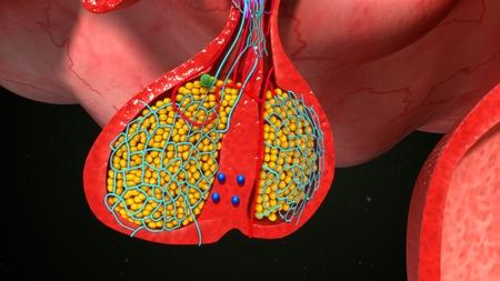 hipofisis: células de la glándula pituitaria endocrinos