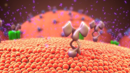 Cell membrane receptors Stock Photo