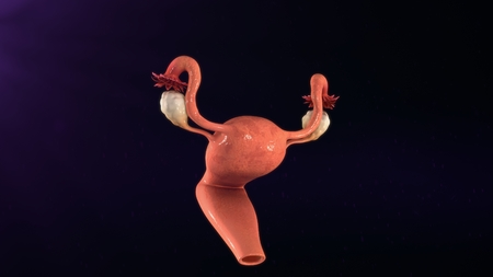 ovaries: Uterus