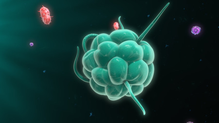 immunological: Macrophage destroying bacteria