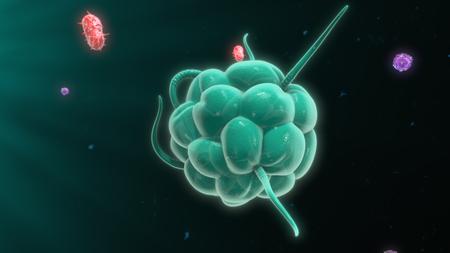 Bacterias macrófagos destruir Foto de archivo - 61716621