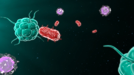 Bacteria attacking the immune system