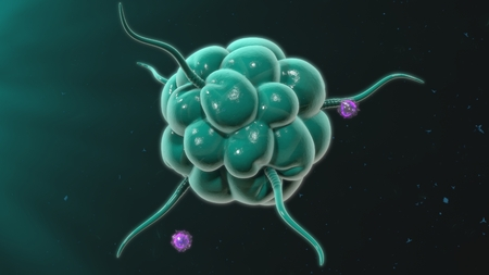 macrophage: Macrophage Stock Photo