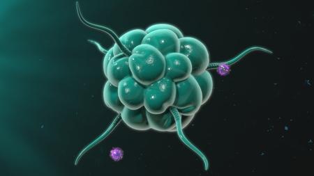 macrophages: Macrophage Stock Photo