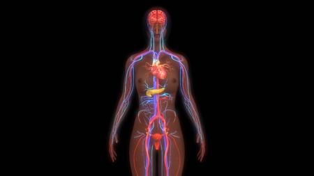 physiology: Human Anatomy