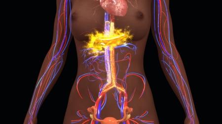 pancreas: Pancreas