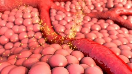 vessels: Blood vessels