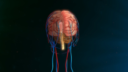 systems thinking: Human brain