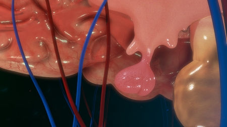 hipofisis: Glándula pituitaria Foto de archivo