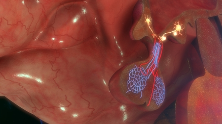 hypothalamus: Hypothalamus releasing GnRH