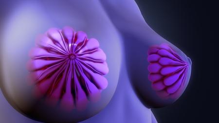 breastfeeding: Mammary glands Stock Photo