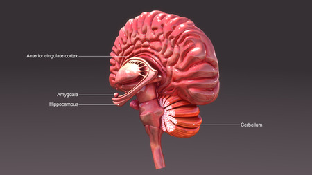 Brain amy