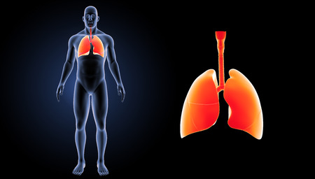 Human Lungs zoom with body anterior view Stock Photo