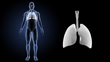 Lungs zoom with body anterior view Stock Photo