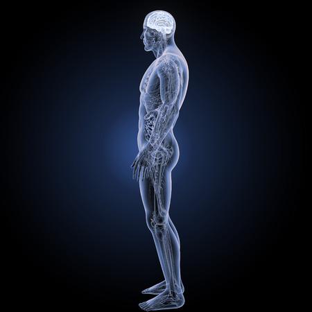 完全な解剖学の側面図の頭脳 写真素材 - 85748617