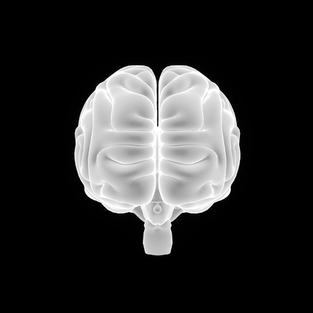 matter: Human Brain anterior view Stock Photo