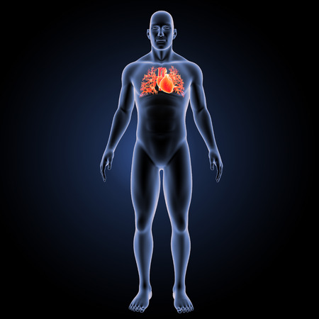 Human heart with body anterior view Stock Photo