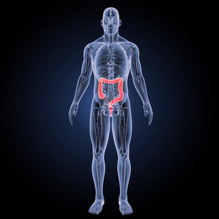 大腸前方ビュー