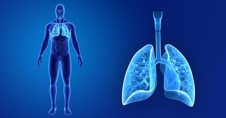 Pulmones humanos zoom con vista anterior de órganos Foto de archivo