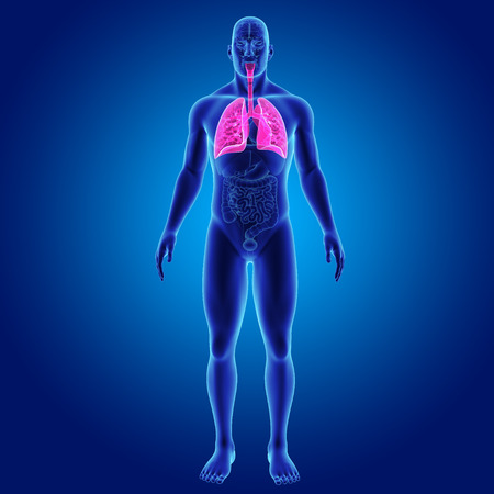 Menselijke longen met organen vooraanzicht