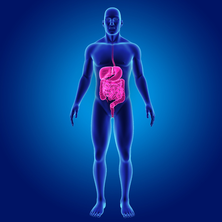 large intestine: Human Digestive system with body anterior view Stock Photo