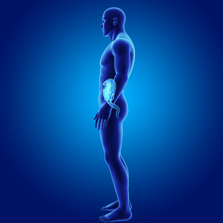 colon: Human Intestine with body lateral view Stock Photo
