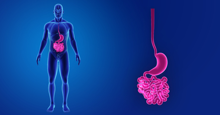 Human Stomach and small intestine zoom with organs anterior view Stock Photo