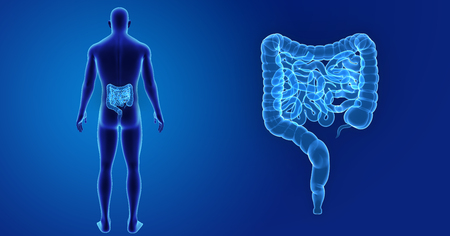 colon surgery: Human Intestine zoom with body posterior view