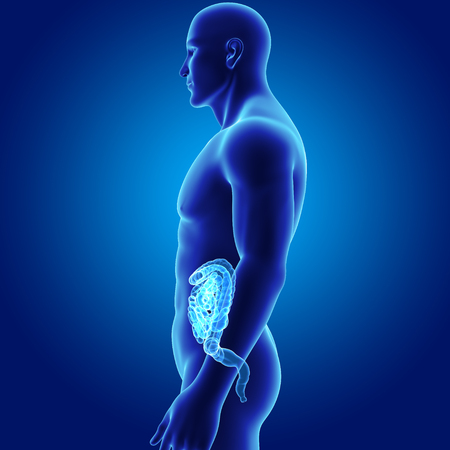 Human Intestine with body lateral view Stock Photo