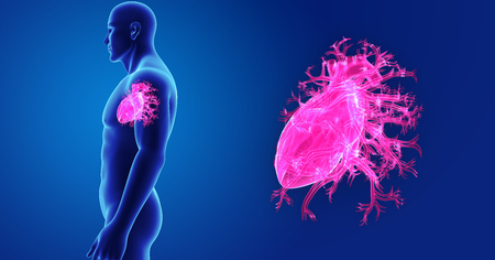 Human Heart zoom with body lateral view Stock Photo