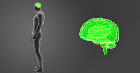 Human Brain zoom with body lateral view