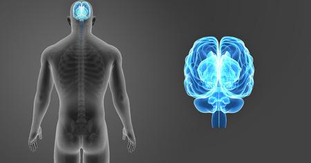 Human Brain zoom with skeleton posterior view Stock Photo