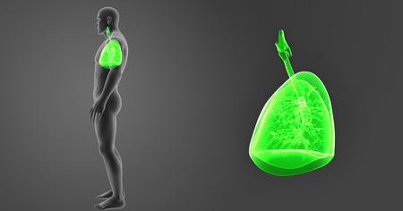Lungs zoom with body lateral view Zdjęcie Seryjne