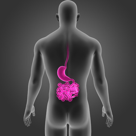 colon surgery: Stomach and small intestine posterior view