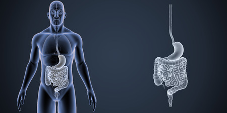 colon: Stomach and intestine zoom with organs anterior view Stock Photo
