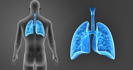 Lungs zoom with skeleton posterior view Stock Photo