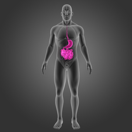 colon: Stomach and small intestine with organs anterior view Stock Photo
