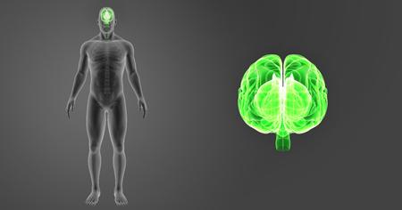 Human Brain zoom with skeleton anterior view