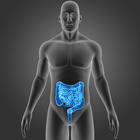 colon surgery: Human Intestine with body anterior view