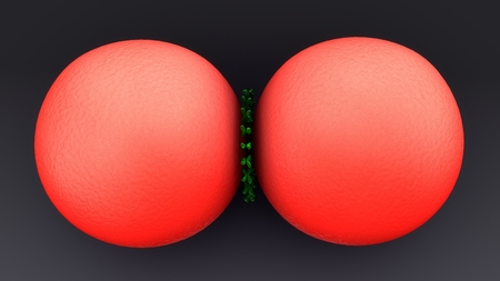 Cell Division top Stock Photo