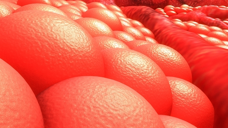 Human Cells closeup