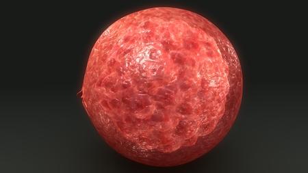 Human Egg blast perspective