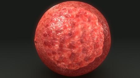 Human Egg blast back