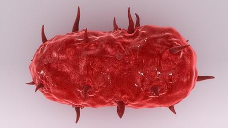 Bacterium top