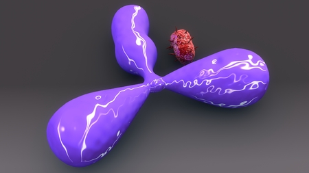 Antigene & Bacteria back