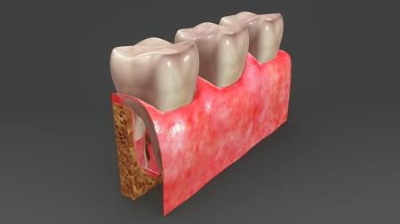 Teeth Anatomy back